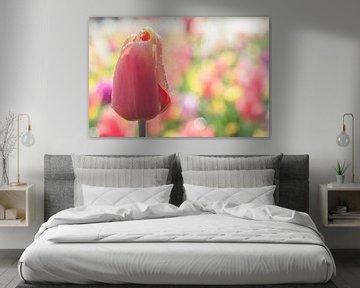 Pastel Tulip Passion