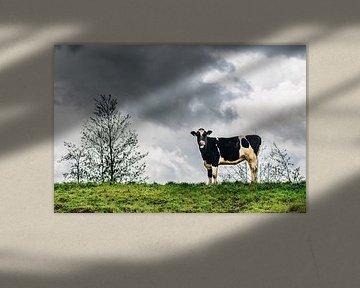 Koe van Thomas van der Willik