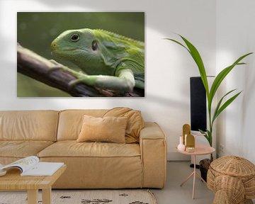 Groene iguana; hagedis in close-up van Linda Heilmann