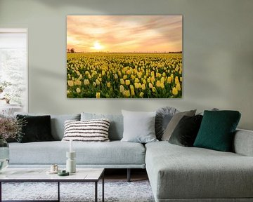 Gele tulpen tijdens zonsondergang van Sjoerd van der Wal