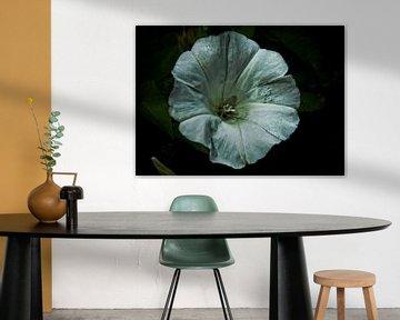 bloem von Esther Swaager ( Studio Toet)
