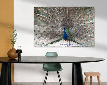Blauwe Pauw van Koos Koosman