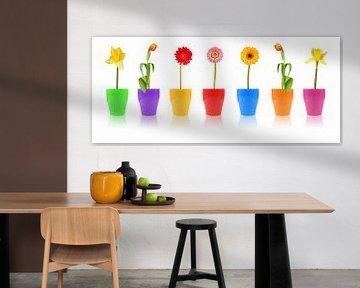 Blumenparade von PhotoArt Thomas Klee