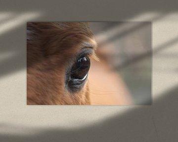 Het paarden-oog