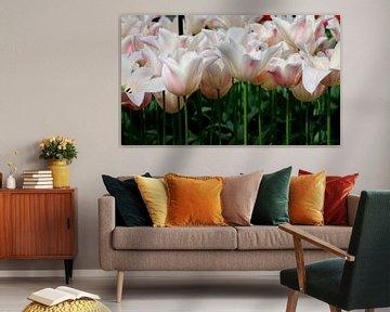 Tulpen von Carolina Vergoossen