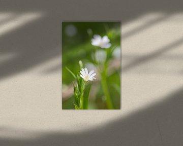 Witte bloem in bloei in het bos