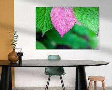 Roze blad van de Sierkiwiplant van Tot Kijk Fotografie: natuur aan de muur