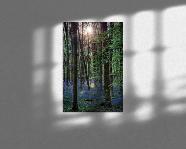 Sfeerimpressie: Hallerbos, ondergaande zon beschijnt hyacinten van Eddie Meijer