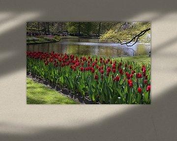 rote tulpen von Annelies Voss