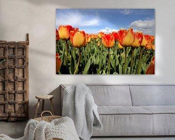 Geel met rode tulpen von Frouwkje Fotografie