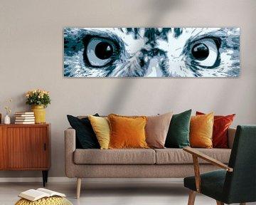 Steenuil ogen van Jan Brons