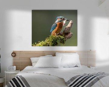 Ijsvogel met gevangen vis von Nico Leemkuil