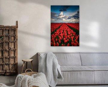 Eindeloos rood tulpenveld