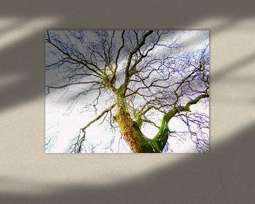Tree Magic 119 van MoArt (Maurice Heuts)