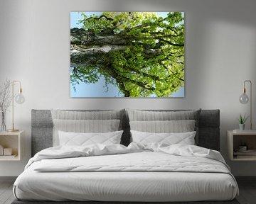 Tree Magic 122 van MoArt (Maurice Heuts)