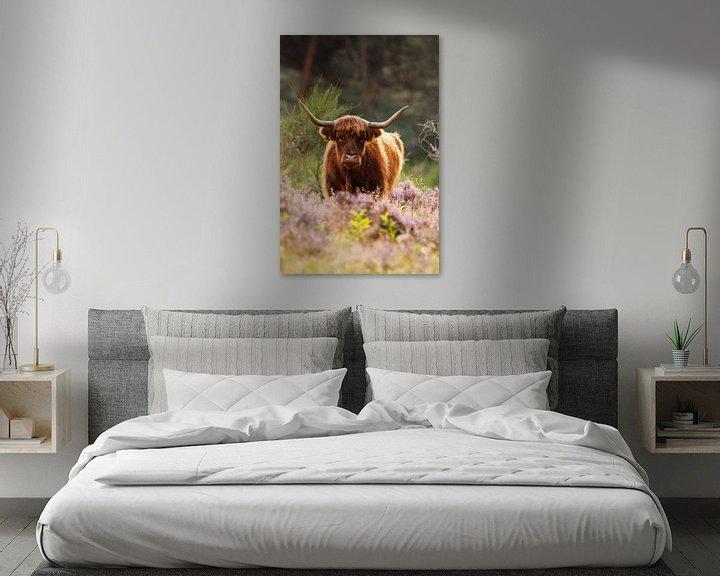 Sfeerimpressie: Schotse hooglander van Pim Leijen