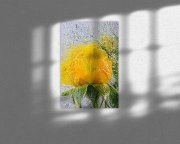 Yellow rose in  ice van Marc Heiligenstein