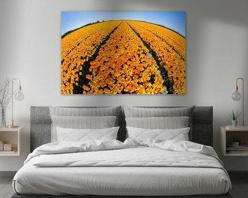 Tulpenveld in bloei van Bart van Dinten