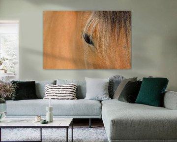 Oog van een paard van Gerda Beekers