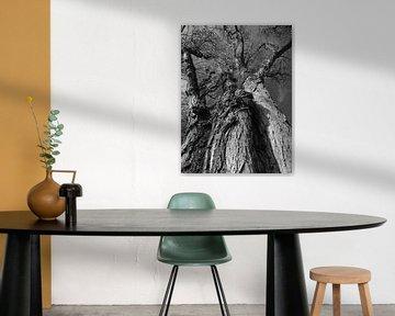 Tree Magic 123 von MoArt (Maurice Heuts)