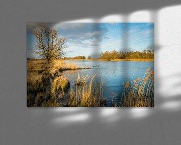 Brede kreek in de Biesbosch van Ruud Morijn