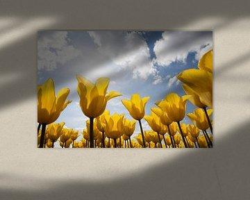 Tulpen von Cees van Valen