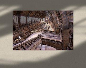 Natuurhistorisch museum Londen / Natural History museum London von Michael Echteld