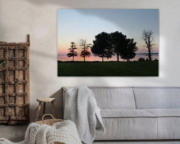 Trees van Mark Kerssing