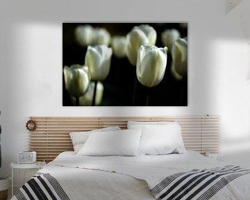 Witte tulpen II