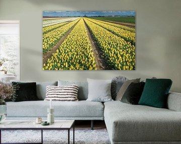 Kleurrijke bollenvelden in Nederland van Ruud Morijn