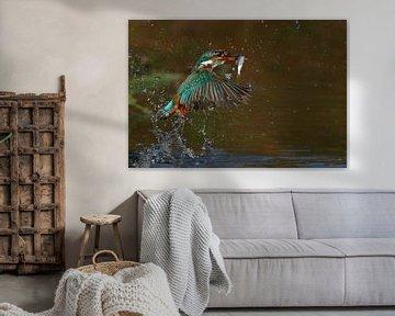 Ijsvogel duikt op met vis (Eisvogel, Kingfisher) von Gejo Wassink
