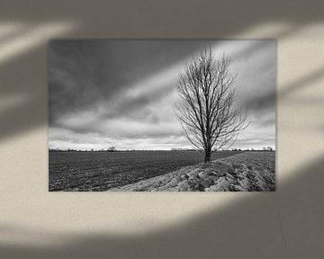 Silhouette eines nackten Baumes einzeln auf dem Feld von Ruud Morijn