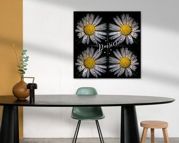 Funkelnde Gänseblümchen von Christine Nöhmeier