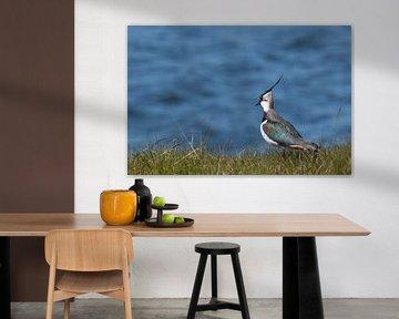 Kievit in het gras met blauw water op de achtergrond van Michèle Huge