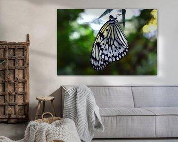 Prachtige zwart witte vlinder, hangend aan een takje von Vera Boels