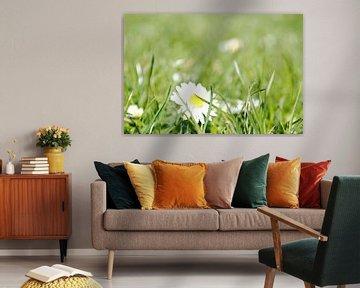 Flowers 9 van Lyn Van Veldhoven