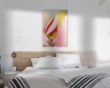 Detail van een roze tulp.