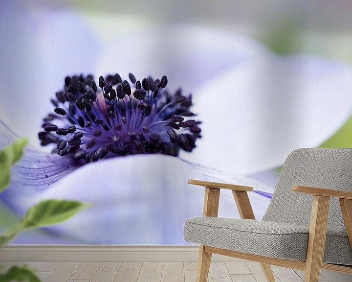 """Beispiel fototapete: Close-up van een Anemone Coronaria """"Mr Fokker"""" .  von Astrid Brouwers"""