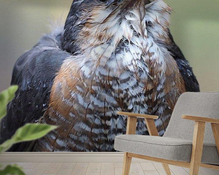 Beispiel fototapete: Close-up van een mannetjes sperwer. von Astrid Brouwers