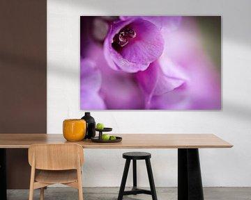 Paarse bloem van Lonneke Prins