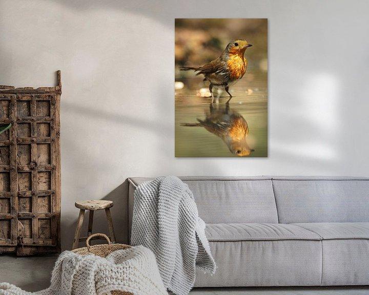 Beispiel: Roodborst met zijn spiegelbeeld von Astrid Brouwers