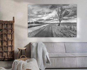 Zwartwit foto van een kale boom in een landelijk gebied van Ruud Morijn
