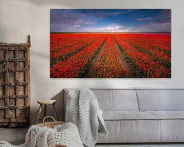 Tulpenveld van Patrick Rodink