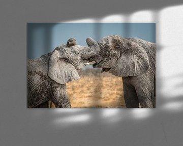 Kuscheln Elefanten Namibia sur Eefke Smets