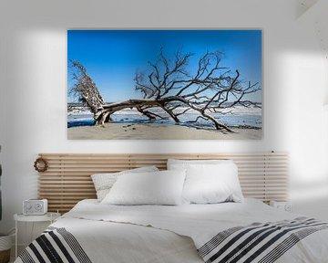 Dode boom op het strand van Karel Pops