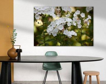 Witte bloemen van Ron Pool