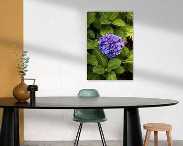 Blauwe bloem van Ron Pool