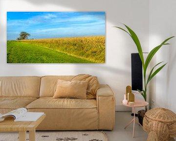 Kleurrijk Nederlands landschap van Ruud Morijn
