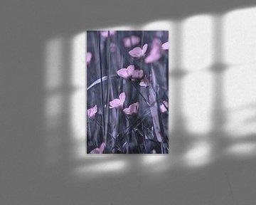 Zarte Blüten von zwergl 0611