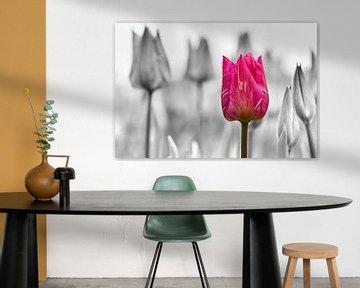 Tulpen van Chantal van Bergeijk